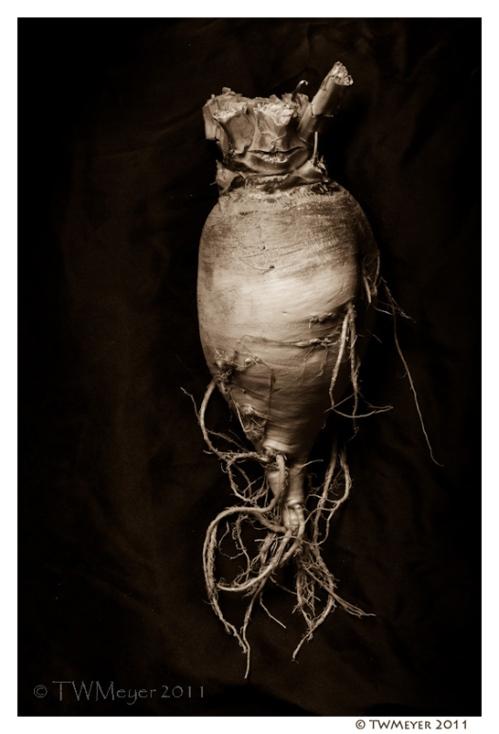 Brassica rapa #2 copyright T.W. Meyer 2011
