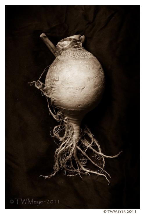Brassica rapa #4