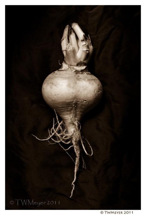Brassica rapa #5 copyright T.W. Meyer 2011