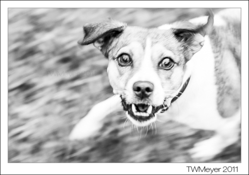 TWMeyer-20110919-8802